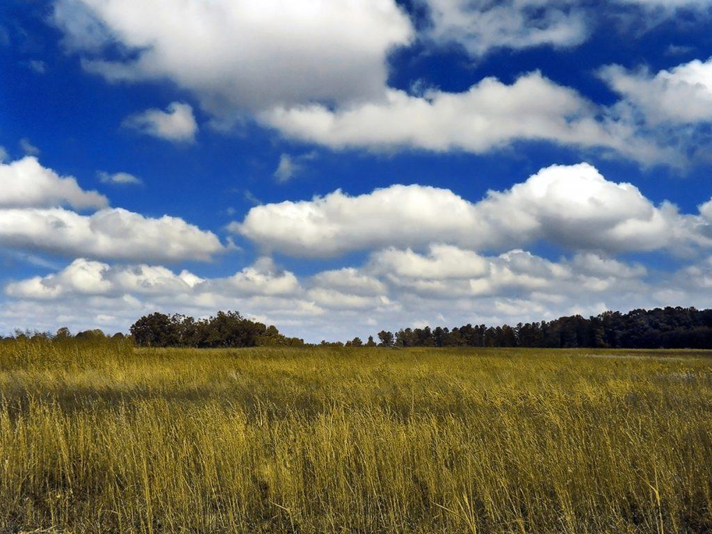 Cumulus Clouds Creative Commons by PiccoloNamek