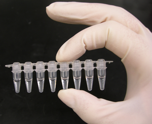 300px-PCR_tubes